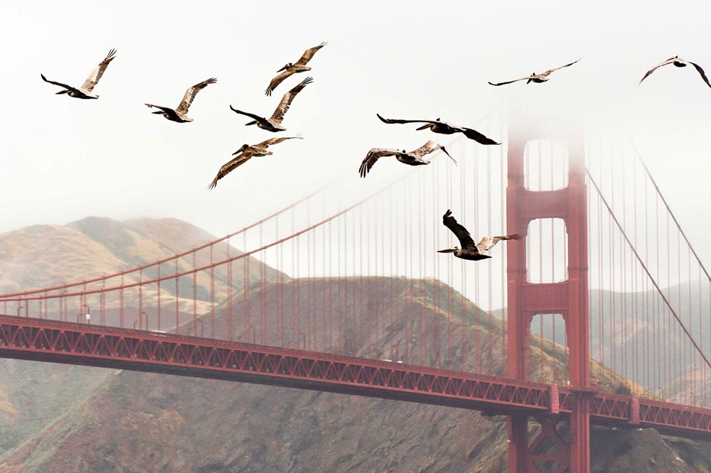 Ionic 4 — Is it Worth to Migrate?